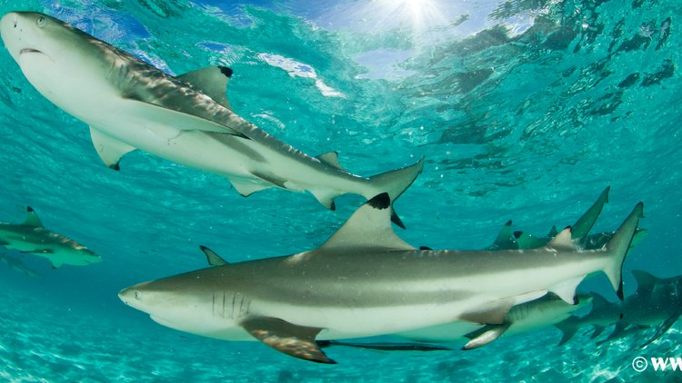 We are supporting the World Wildlife Fund's 'No Shark Fin' pledge